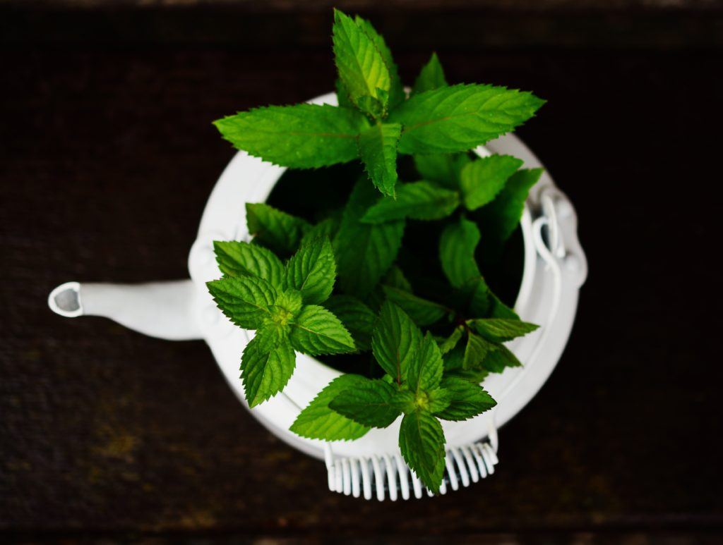 White tea pot growing herbs in it