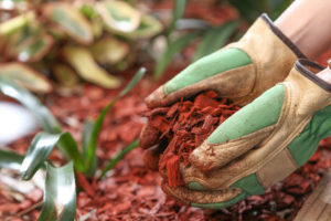 Gardener's gloves holding red mulch