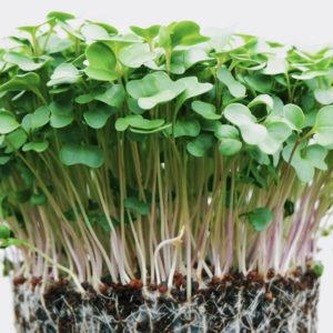 Microgreens Gift Basket