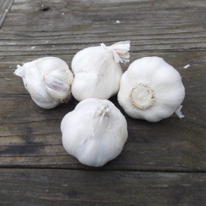 Softneck garlic on a wooden table