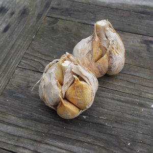Elephant garlic on a wooden table