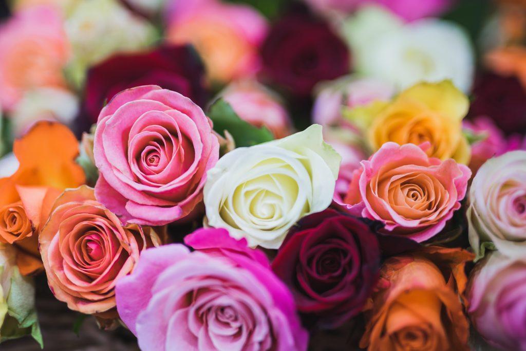 Guía del significado de los colores rosados