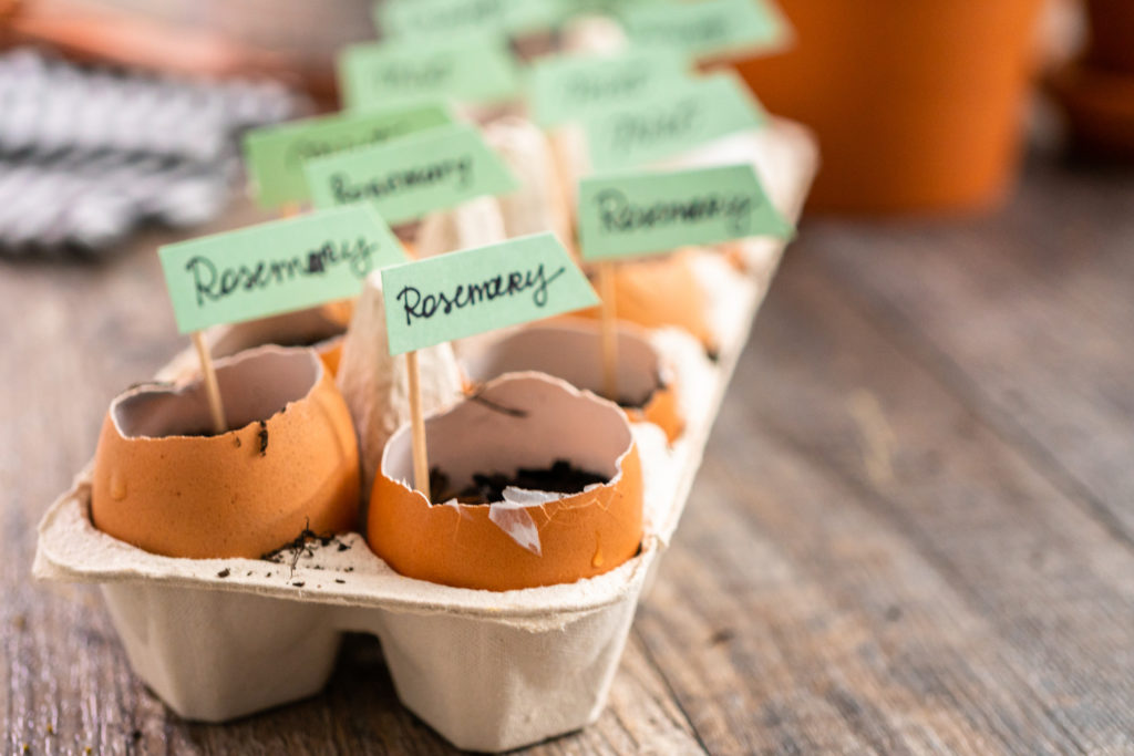 Plantings seeds in eggshells and labeling them with small plant tags.