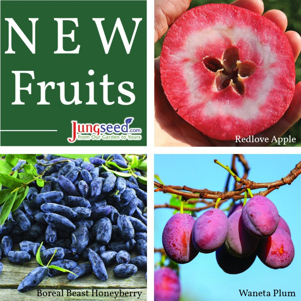 New Fruit at Jung Seed