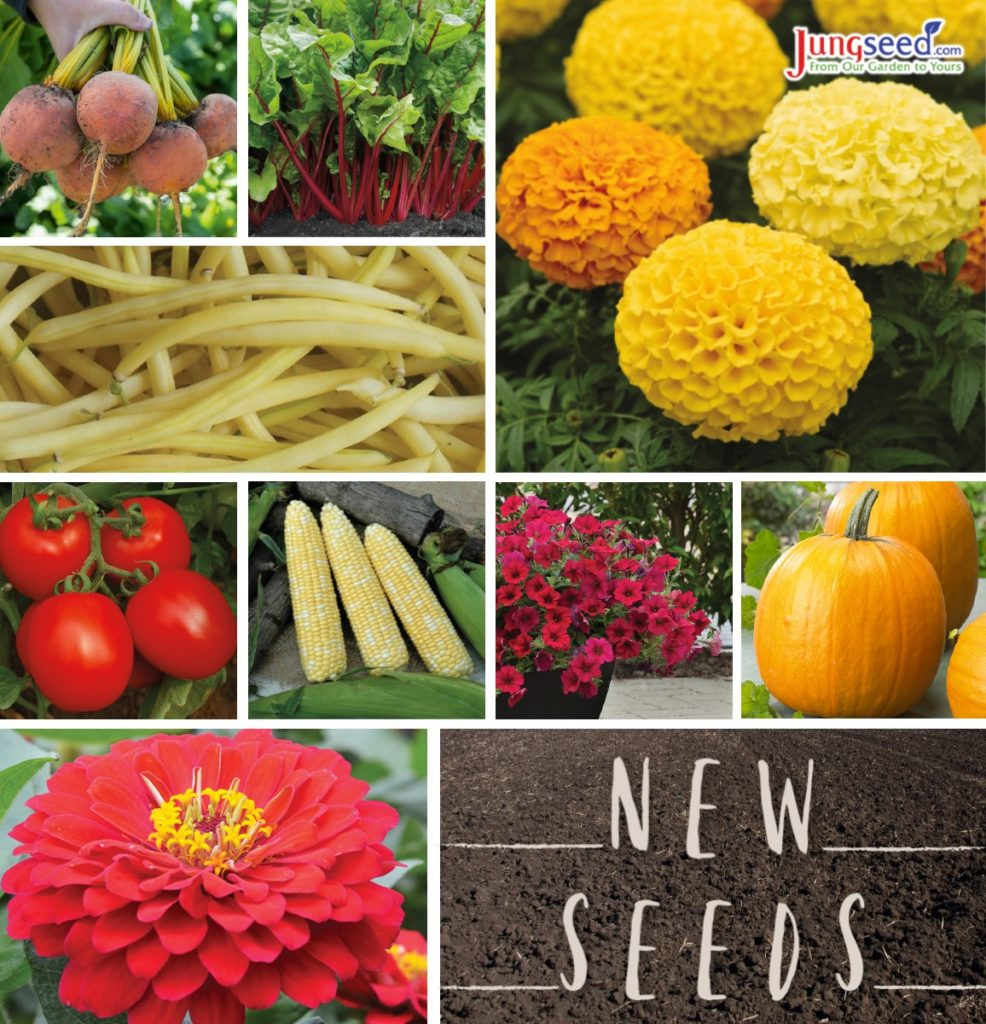New Seeds Available at Jung Seed