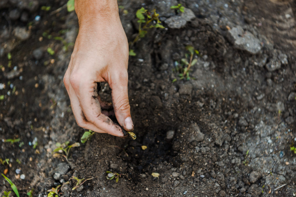 hand placing pumpkin seed in the ground