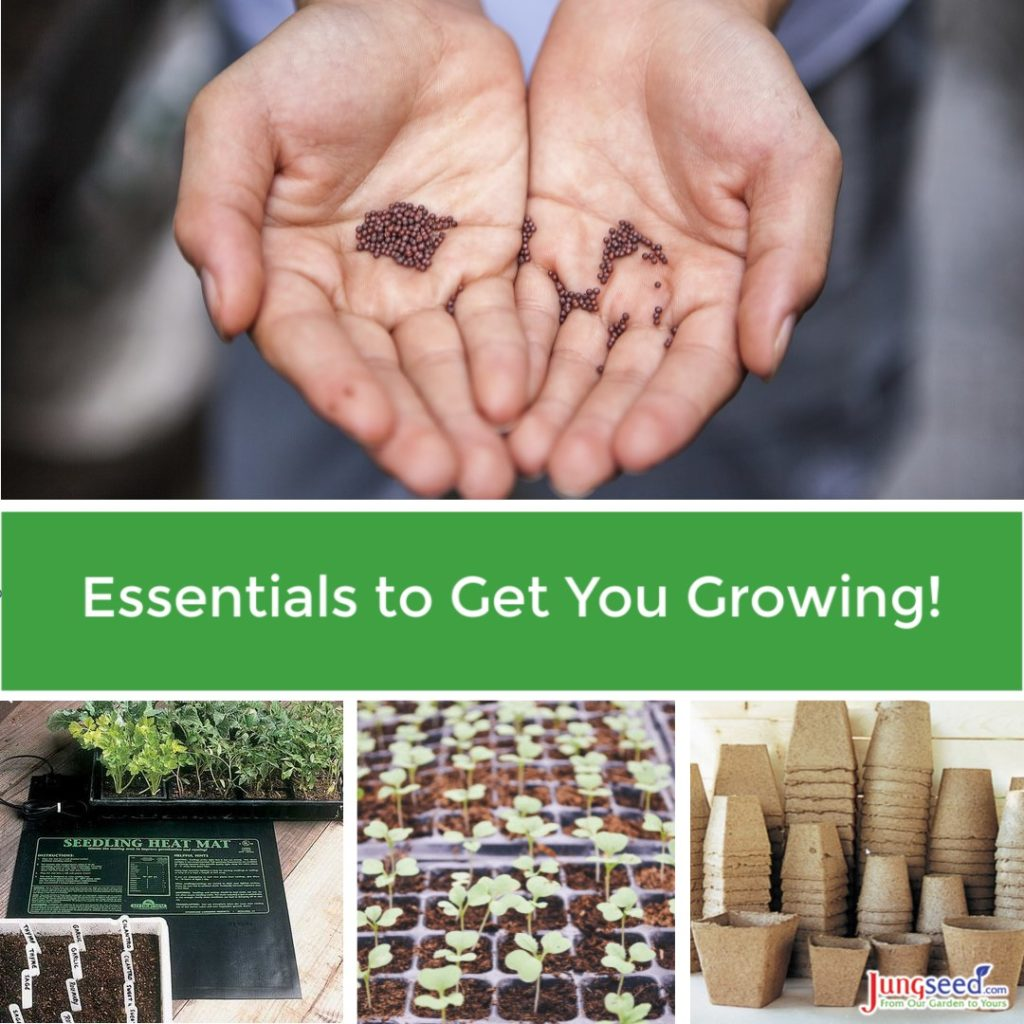 Essentials to get you growing