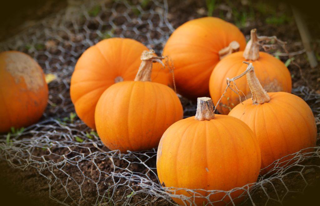 orange pumpkins sitting in a net on the ground