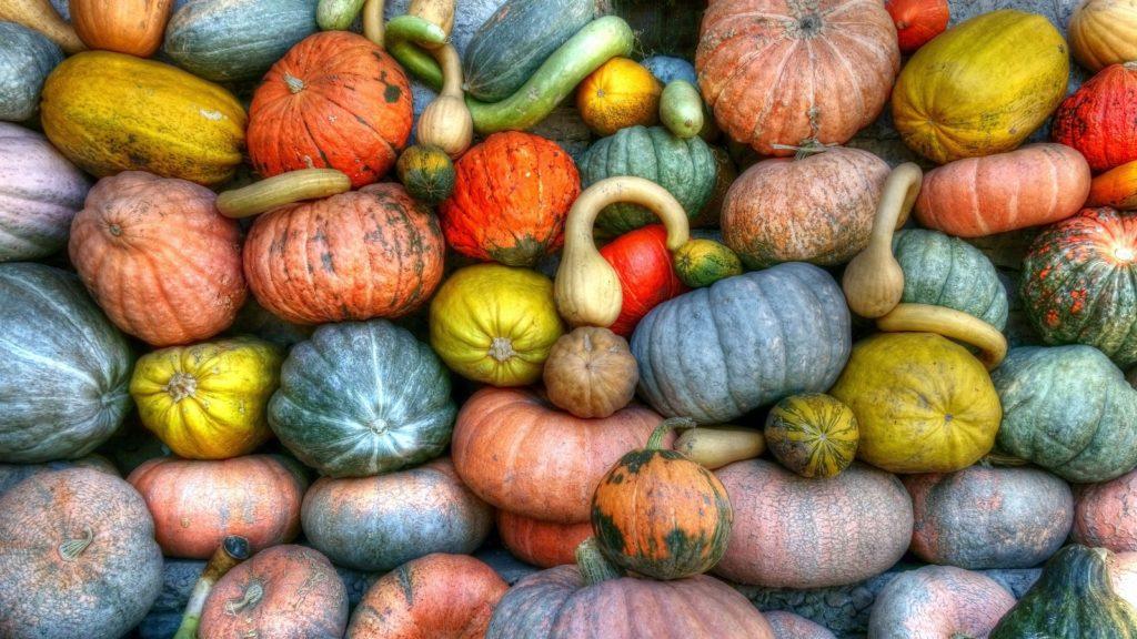 Squash and Pumpkin – Growing Tips
