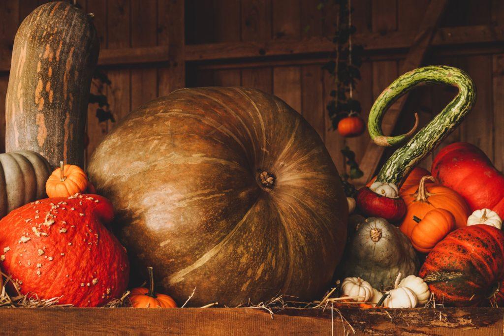 Pumpkins and squash in a barn