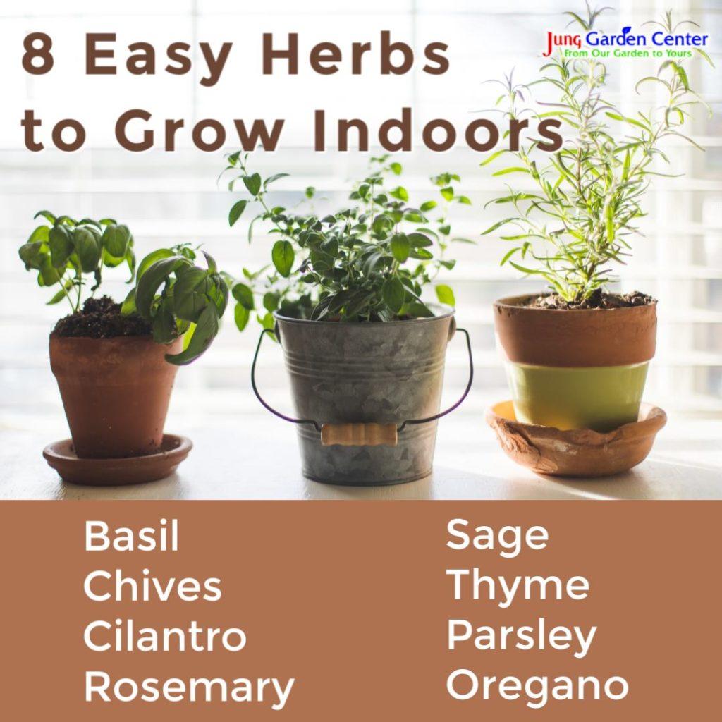 8 easy herbs to grow indoors
