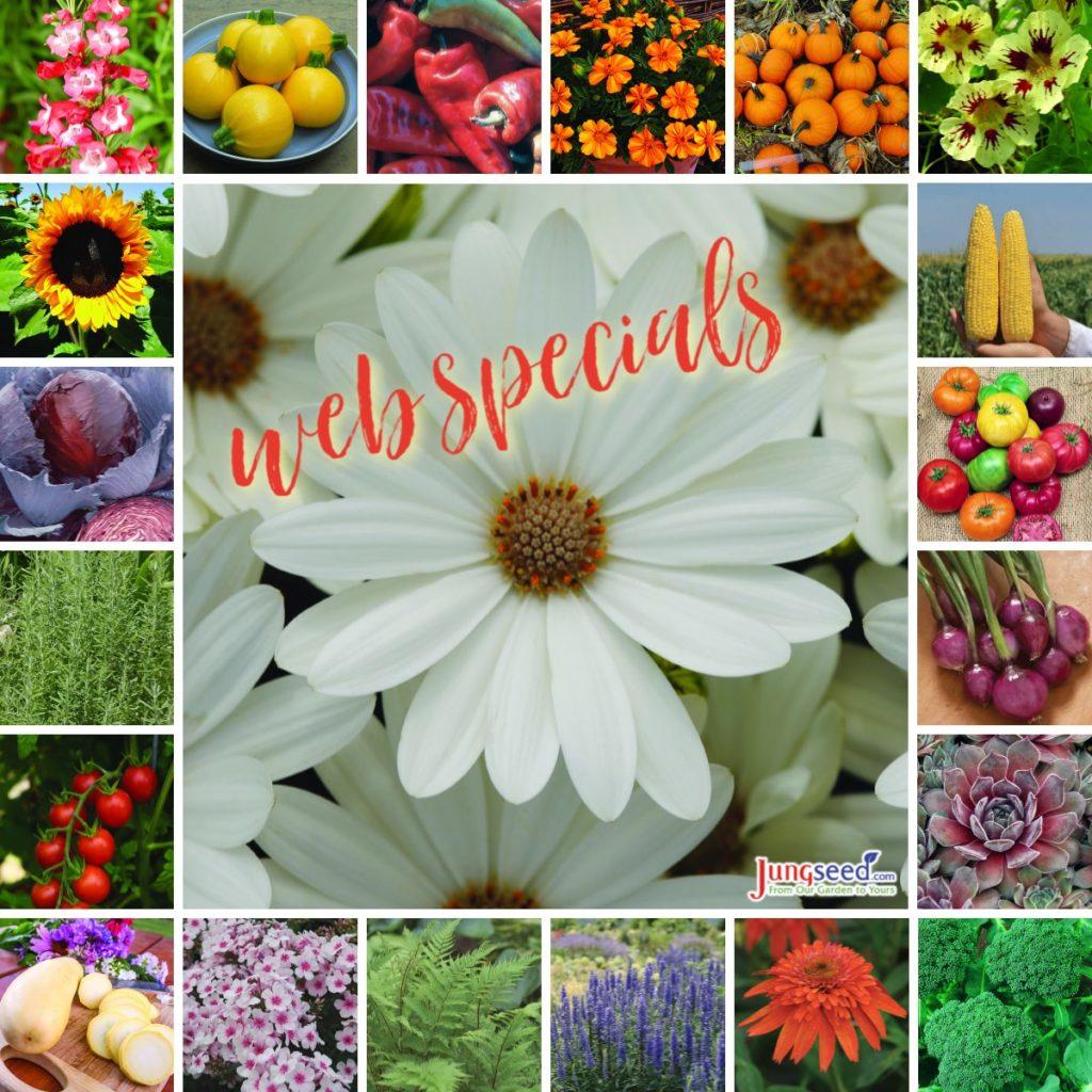 Web specials ad