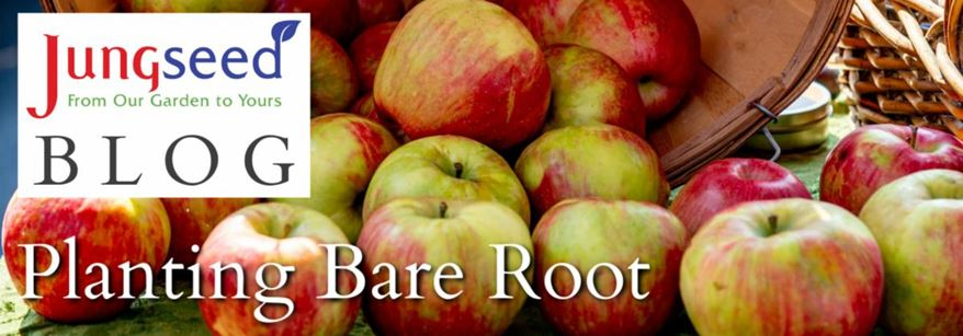 Bare Root Article Ad