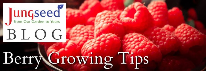 Berry Growing Tip Article Ad