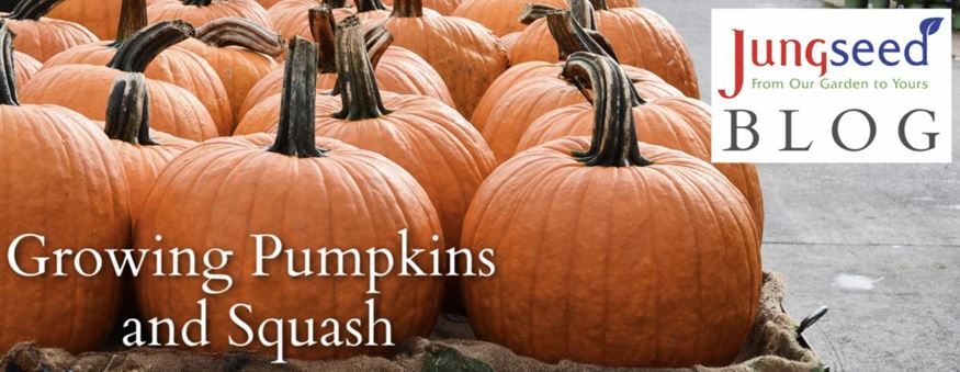 Growing Squash and Pumpkin Article Ad