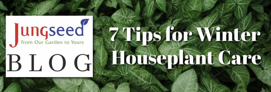 Houseplant Winter Care Article Ad