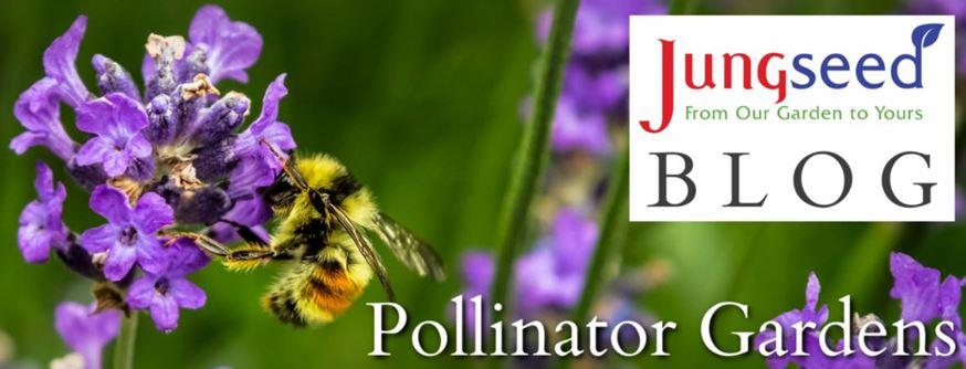 Pollinator Garden Article Ad