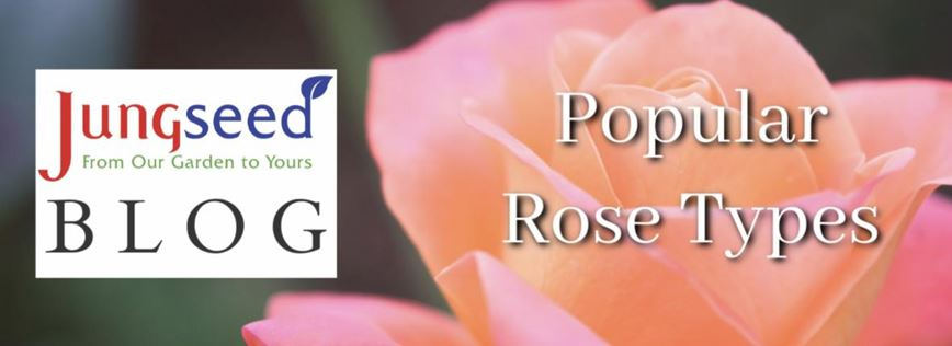 Rose Types Article Ad