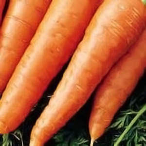 heirloom carrot