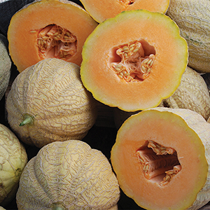 heirloom melon