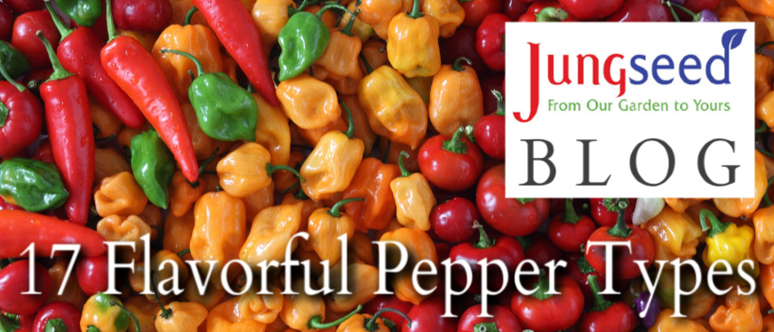 17 Pepper Types Article Ad