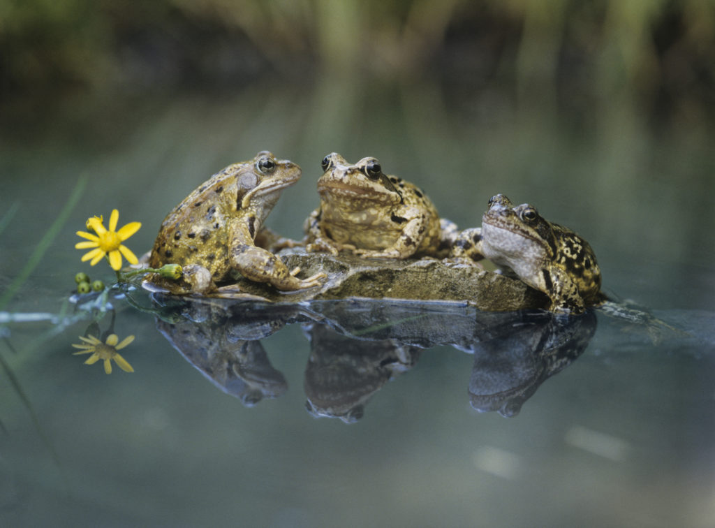 7 Tips To Attracting Reptiles, Toads, & Frogs To Your Garden