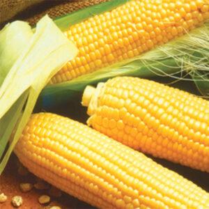 Se type sweet corn