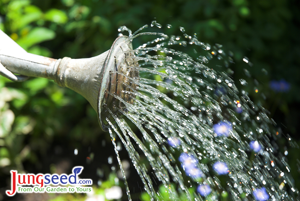 11 Watering Tips for Your Garden