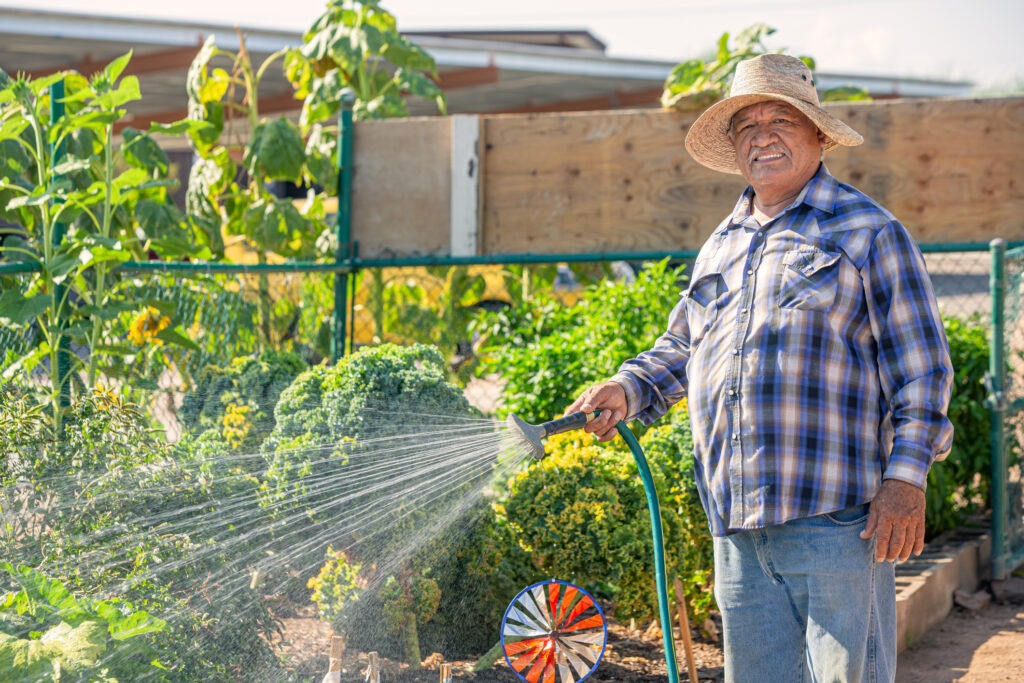 Hispanic Man Wearing Hat Watering Crop in a Community Garden