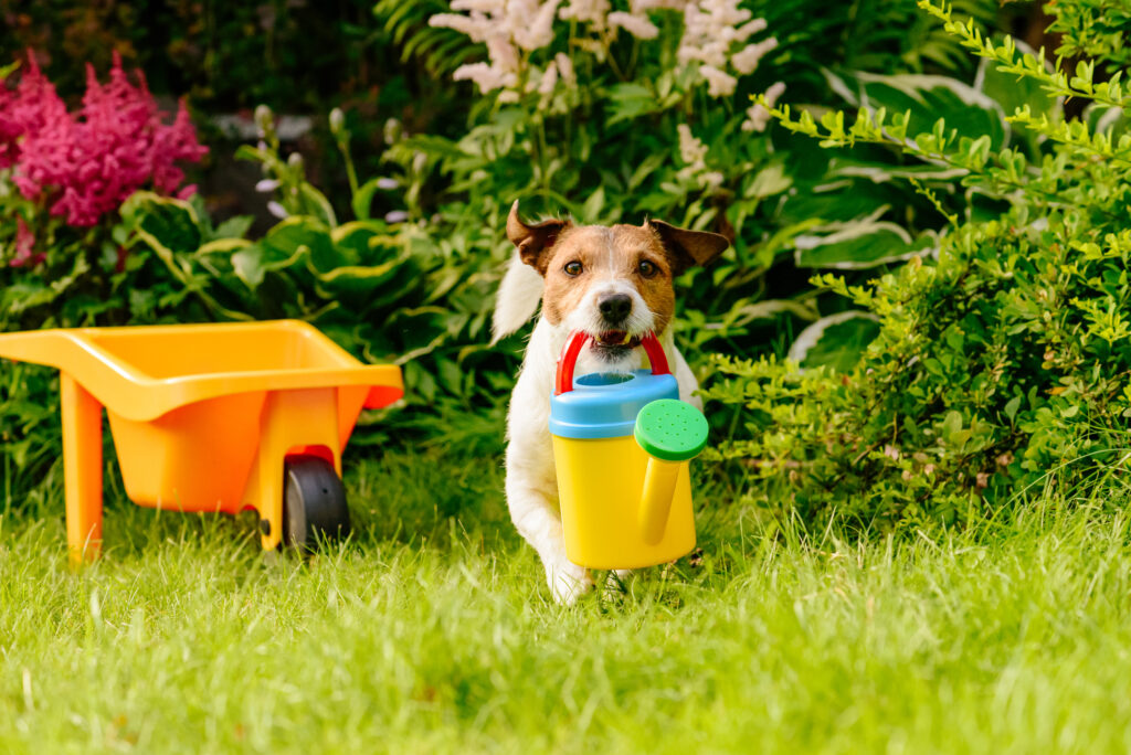 A dog carrying a watering can in his mouth