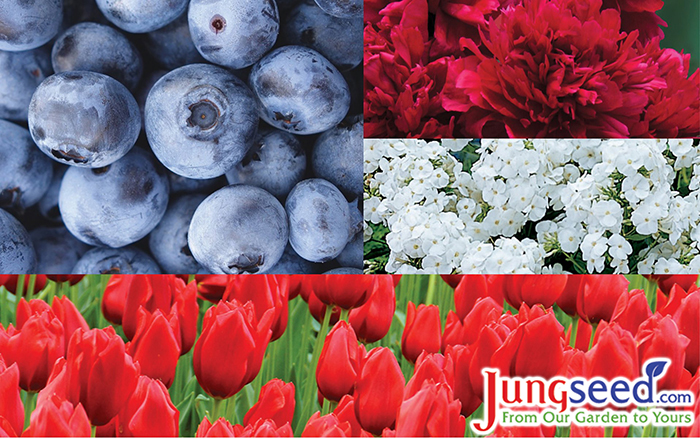 24 Flowers, Fruit, & Plants Perfect For Your Patriotic Garden