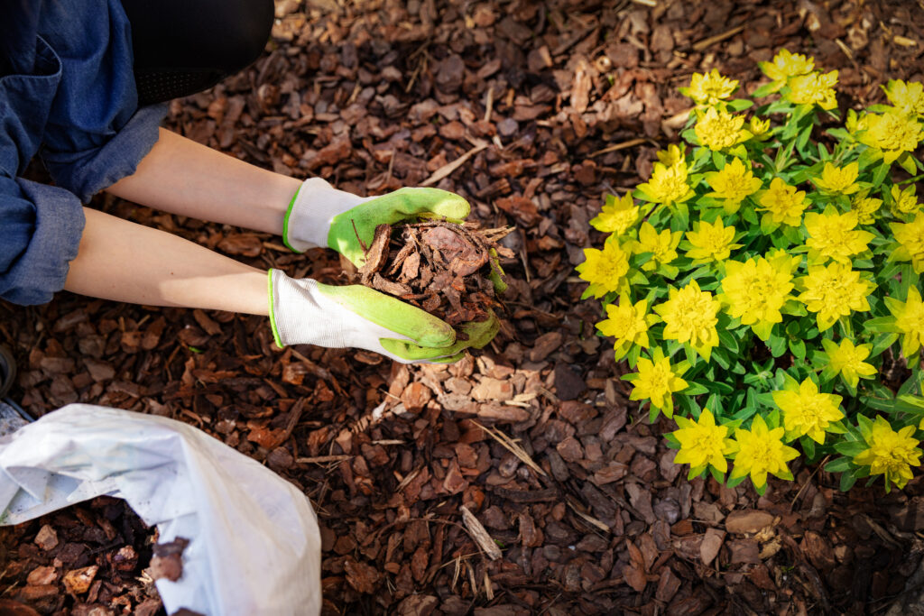 Hands adding wood chip mulching near flowers