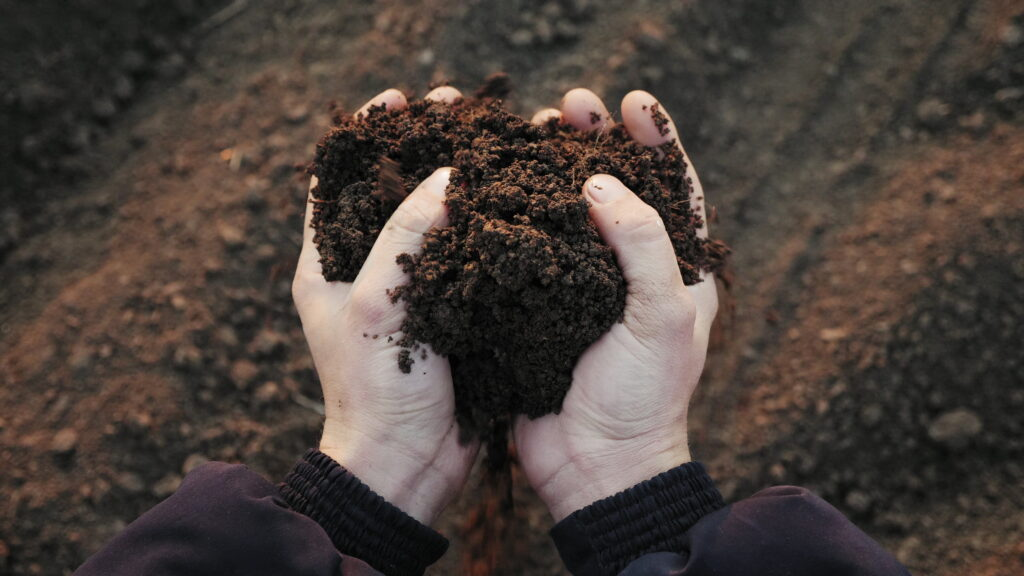 Farmer holding soil in hands close-up
