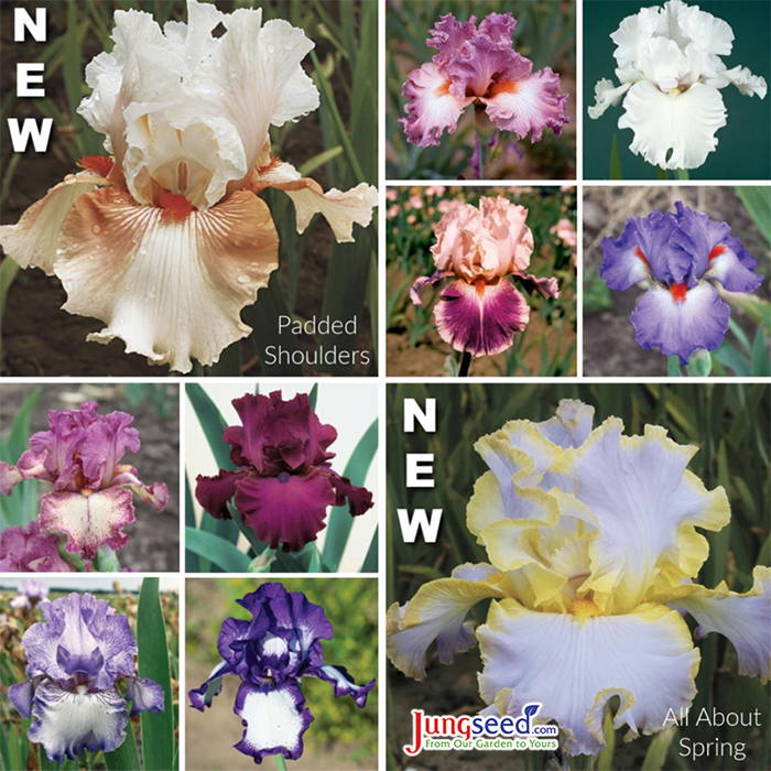 german bearded iris varieties available at jung seed