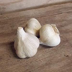 Northern garlic