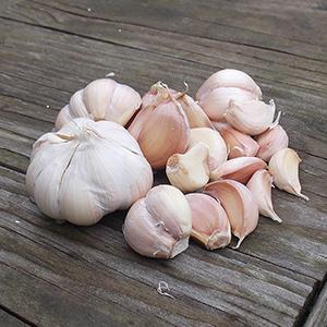 Vietnamese garlic