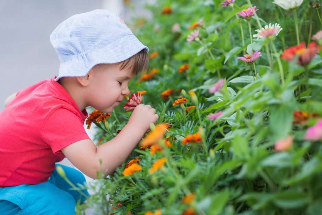 The little boy is smelling the flowers in the garden