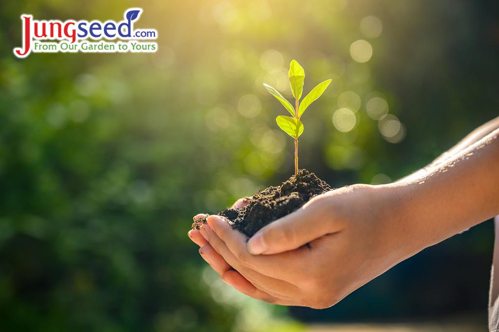 Preguntas frecuentes sobre el inicio de semillas |  Blog de jardinería con Estiercoles.coms