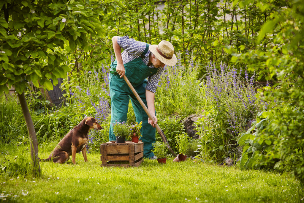 Man gardening with his dog next to him