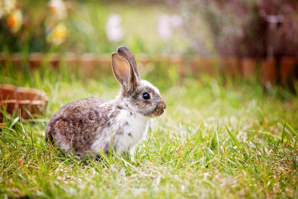 Adorable little bunny in garden