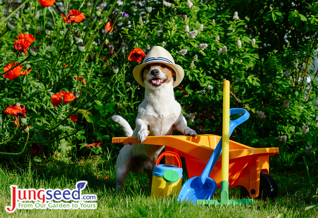 Six Tips To Create The Perfect Dog-Friendly Garden