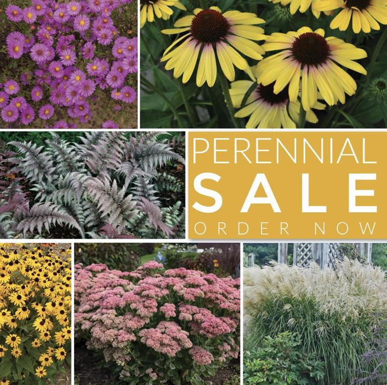 perennial plant sale