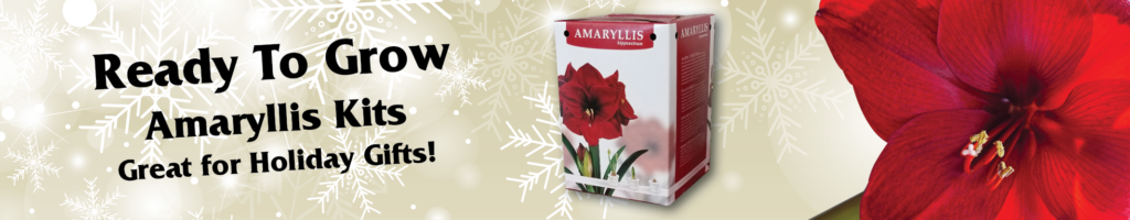 Ready to grow amaryllis kits