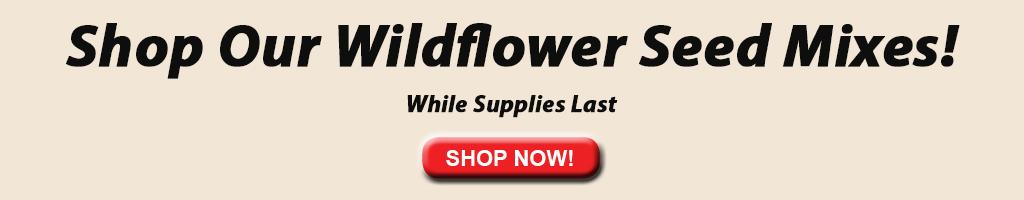Mezclas de semillas de flores silvestres