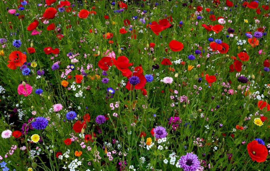 Cama de flores silvestres en un jardín rural en verano