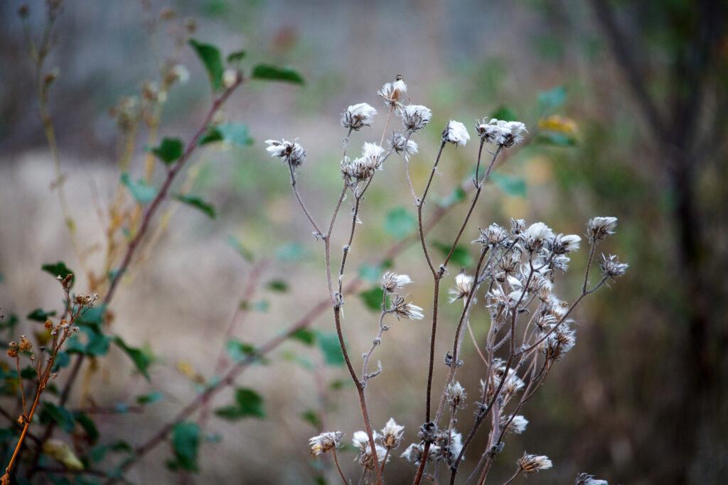 Primer plano de un paraguas seco en otoño en forma de flor silvestre en el fondo del bosque borrosa, enfoque selectivo