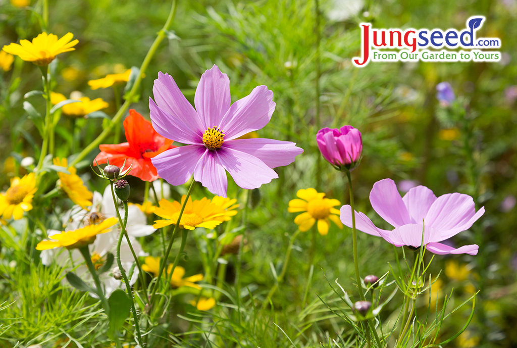 Wildflower Magic: Sowing Perennial Wildflower Seeds For Success
