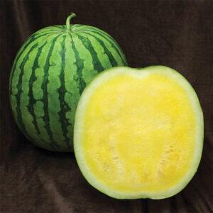 Yellow Buttercup Hybrid Seedless Watermelon