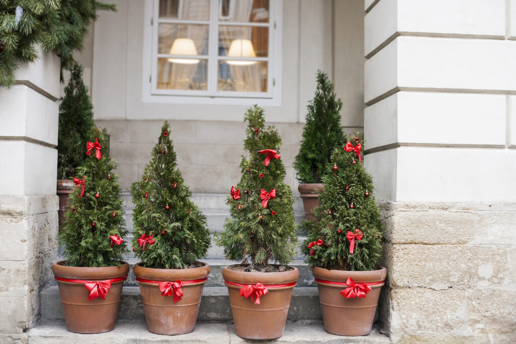 Decorated with red bows and balls Christmas trees in pots near old house