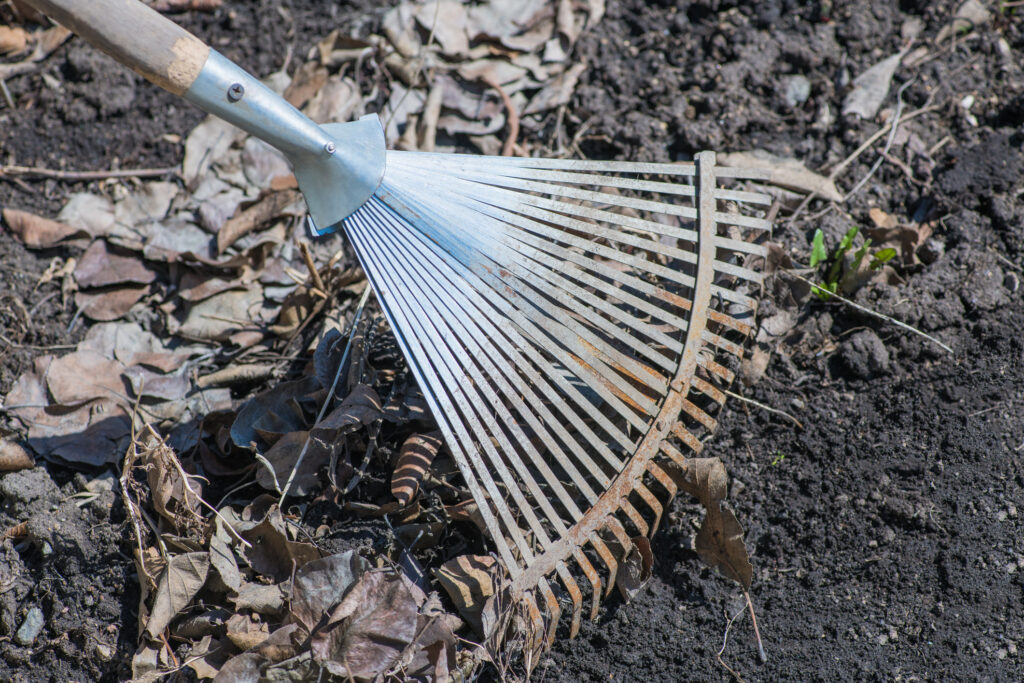 Cleaning dried leaves with fan rakes